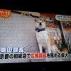 【めざましテレビ】イケメンアニマル総選挙!イケメンヤギマジでイケメンww