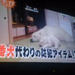 【めざましテレビ】1340万の巨大シロクマ人形が売れている事実((((;゜Д゜)))【金持ちすげぇ】