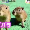 【めざましテレビ】 アニマル赤ちゃん大集合!可愛い動物いっぱい^q^