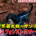 【有吉弘行のダレトク!?】キモうまグルメ!インドネシア!アジアンフォレストスコーピオンを喰う!