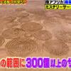 【世界の何だコレ!?ミステリー】4kmの範囲に300個以上のミステリーサークル!!これはUFOの仕業なのか!?