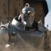 【悲報】映画・鋼の錬金術師のアルの声は水石亜飛夢に決定!釘宮理恵じゃないだと!?