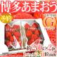 【悲報】韓国のイチゴは美味しい!→実は日本のイチゴをパクって荒稼ぎしてた!相変わらずか