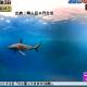 【無人島0円生活】悲報!サメがCG演出で激萎え!何故ヤラセしたし!